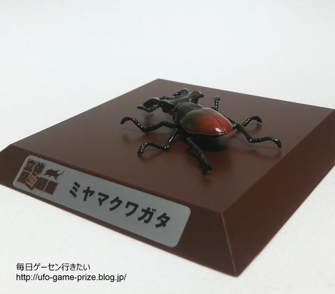 CIMG3408