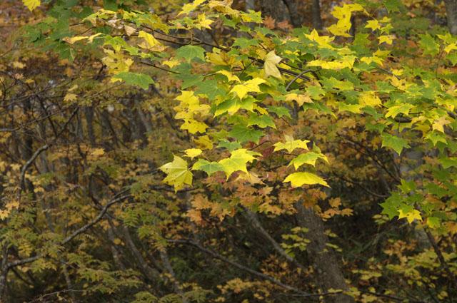 ドッコ沼紅葉2