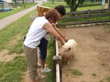 ママと夏ちゃんと豚