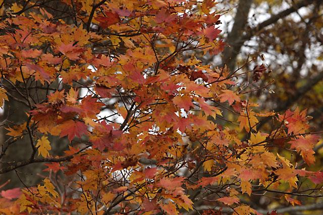 ドッコ沼紅葉1