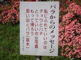 バラ公園看板