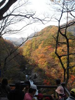紅葉の秋保大滝