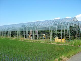 さくらんぼ畑