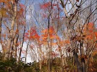 大露天風呂から見える紅葉
