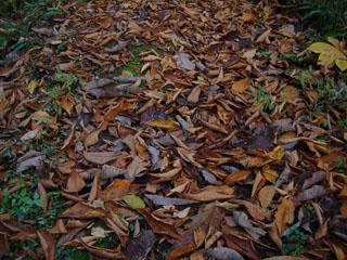水辺の小径の落葉