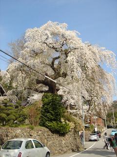 20090418平泉寺の桜