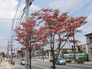 宮町の街路樹