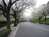 20090405TOKYOサイクリング8皇居の桜