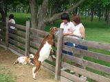 ヤギと夏ちゃんとママ