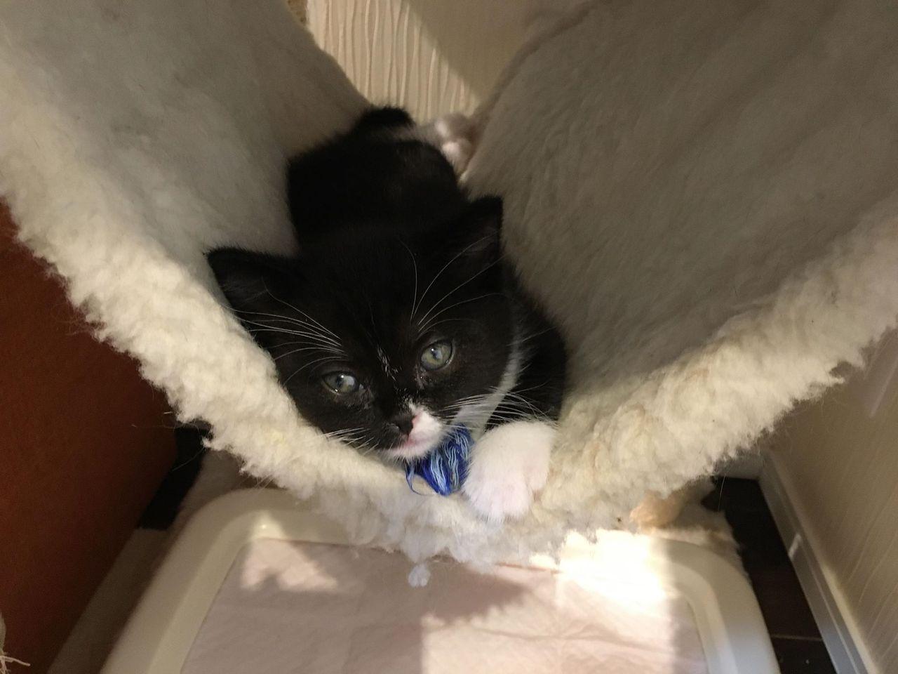 撮影:kuro様かわいい猫スタッフ達にぜひ癒やされてください。
