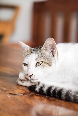 cat-169095_640