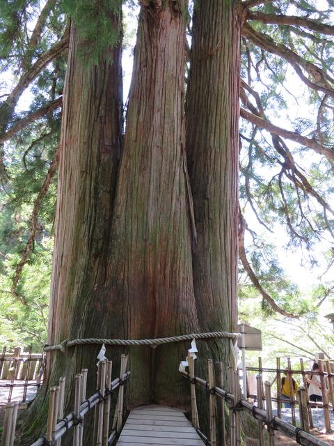中社 3本杉