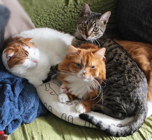 うちの3猫