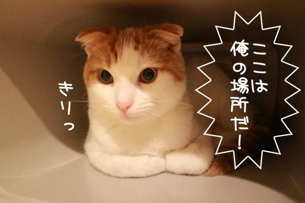 ゴミ箱で遊ぶ猫たち19