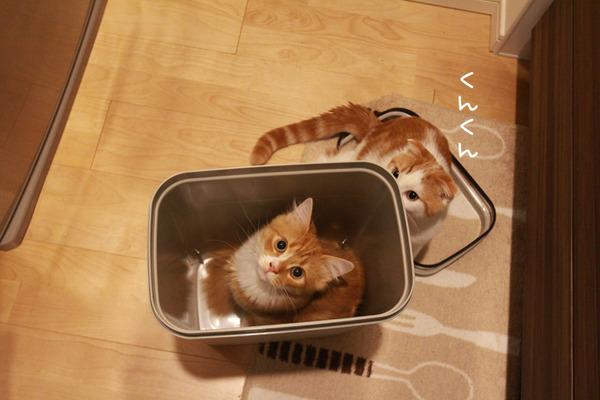 ゴミ箱で遊ぶ猫たち3
