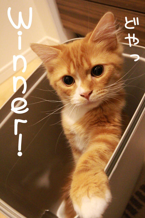 ゴミ箱で遊ぶ猫たち11