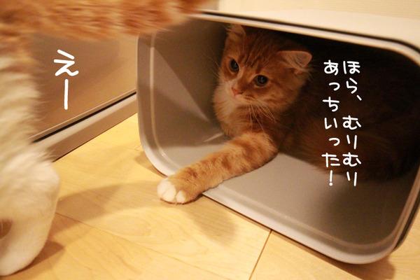 ゴミ箱で遊ぶ猫たち27