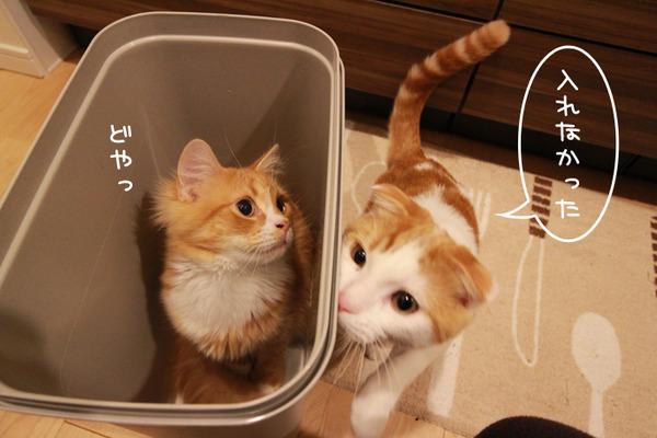 ゴミ箱で遊ぶ猫たち9