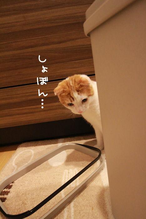 ゴミ箱で遊ぶ猫たち12