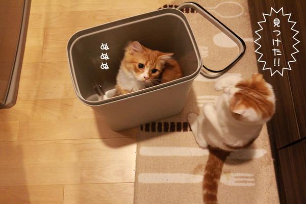 ゴミ箱で遊ぶ猫たち6