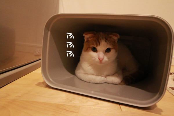ゴミ箱で遊ぶ猫たち18