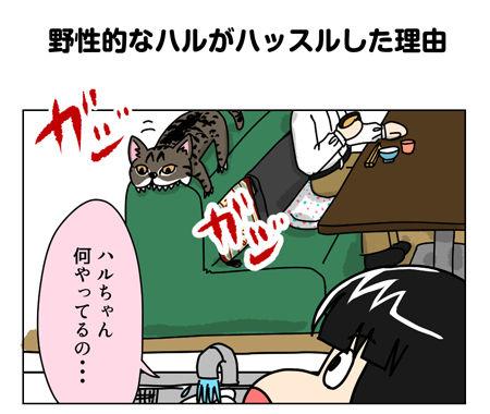 猫漫画001_1_01【猫漫画1】野性的なハルがハッスルした理由