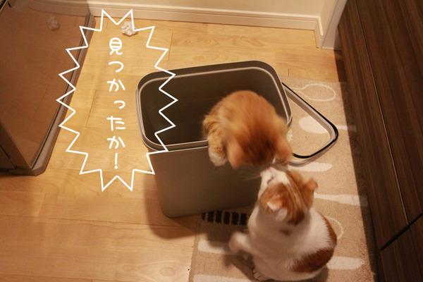 ゴミ箱で遊ぶ猫たち7