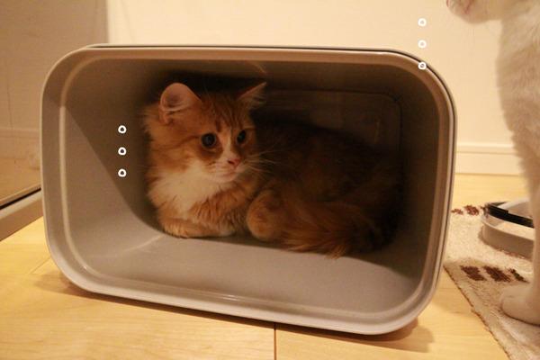 ゴミ箱で遊ぶ猫たち25
