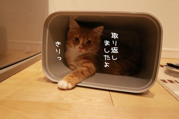 ゴミ箱で遊ぶ猫たち29