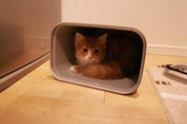 ゴミ箱で遊ぶ猫たち23