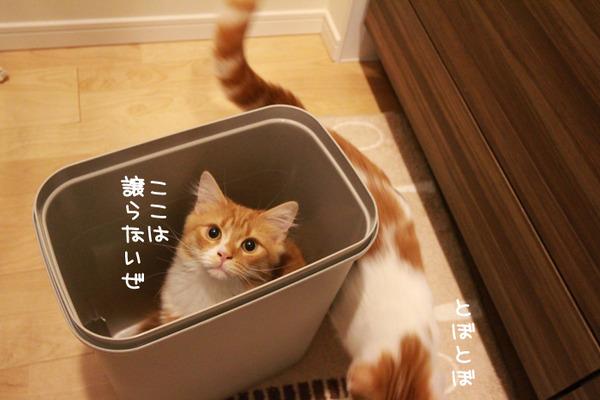 ゴミ箱で遊ぶ猫たち10