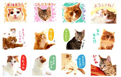猫写真スタンプ スコ!スコ!キジトラ!