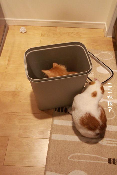ゴミ箱で遊ぶ猫たち5