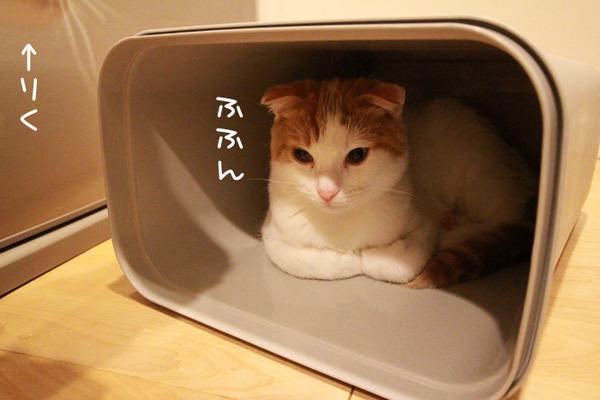 ゴミ箱で遊ぶ猫たち15