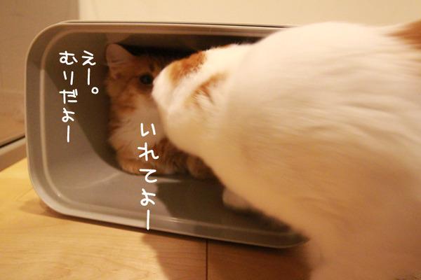 ゴミ箱で遊ぶ猫たち26