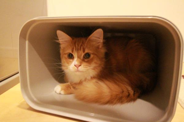 ゴミ箱で遊ぶ猫たち24