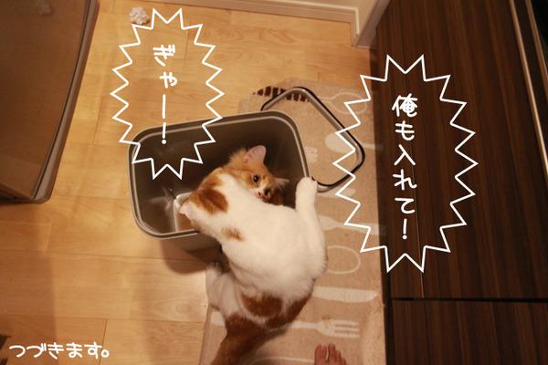 ゴミ箱で遊ぶ猫たち8
