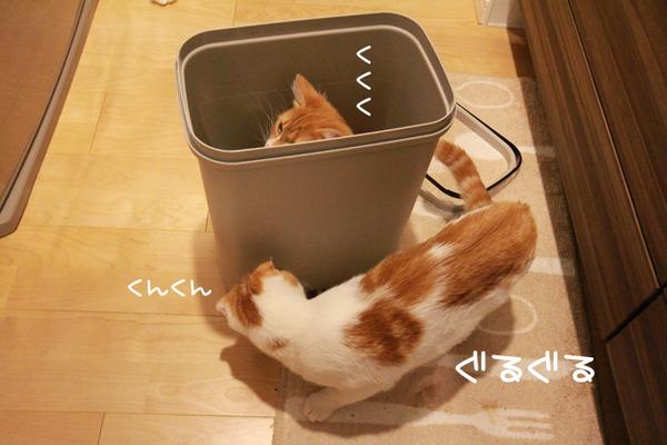 ゴミ箱で遊ぶ猫たち4