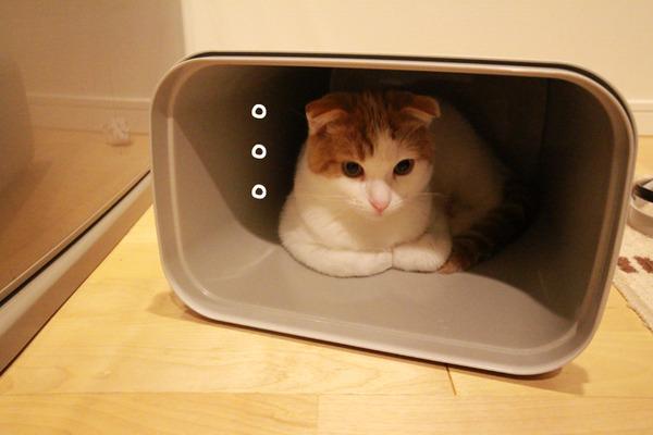 ゴミ箱で遊ぶ猫たち21