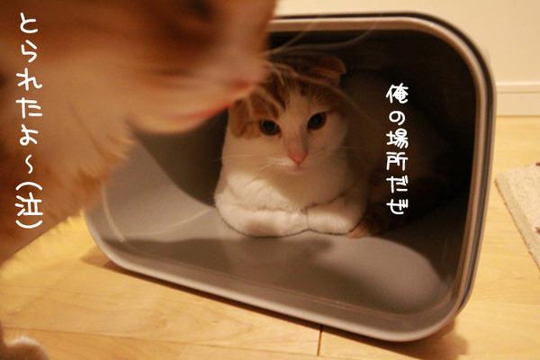 ゴミ箱で遊ぶ猫たち16