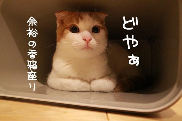 ゴミ箱で遊ぶ猫たち20