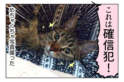 小悪魔猫ハル_2_02