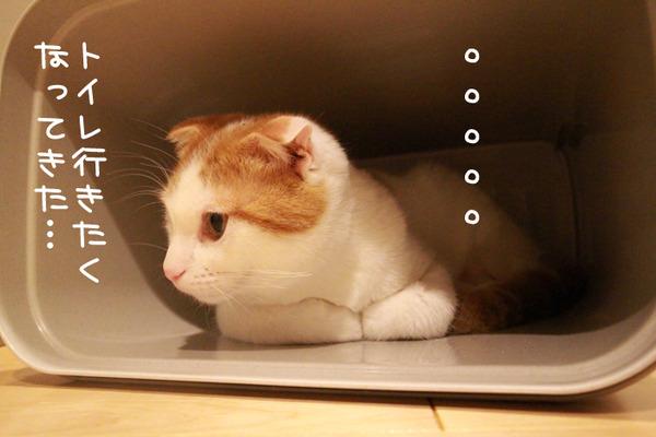ゴミ箱で遊ぶ猫たち22