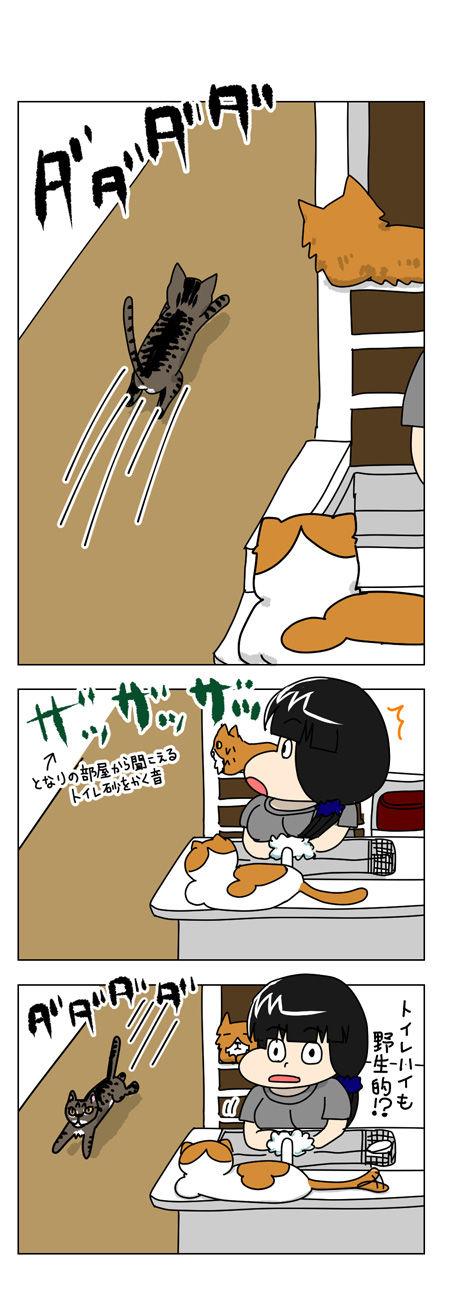 猫漫画001_3【猫漫画1】野性的なハルがハッスルした理由