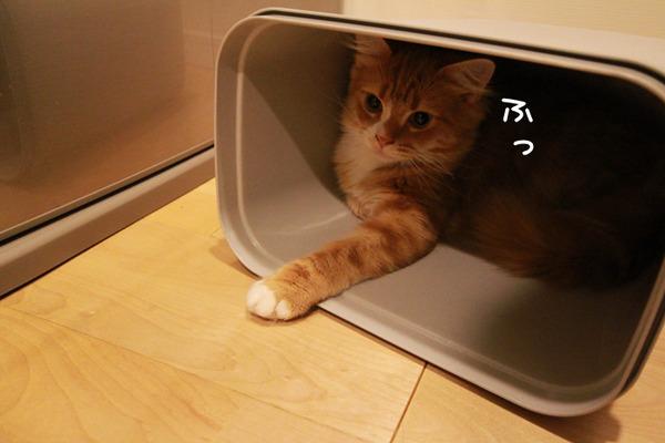 ゴミ箱で遊ぶ猫たち28
