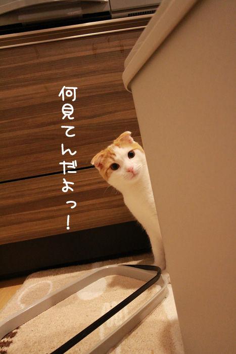ゴミ箱で遊ぶ猫たち13