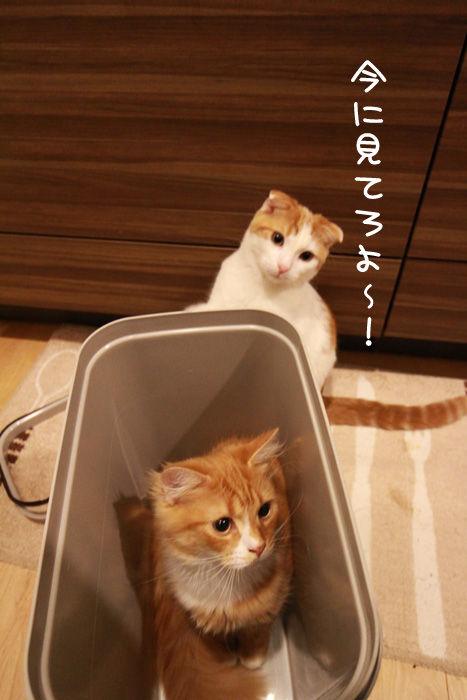ゴミ箱で遊ぶ猫たち14