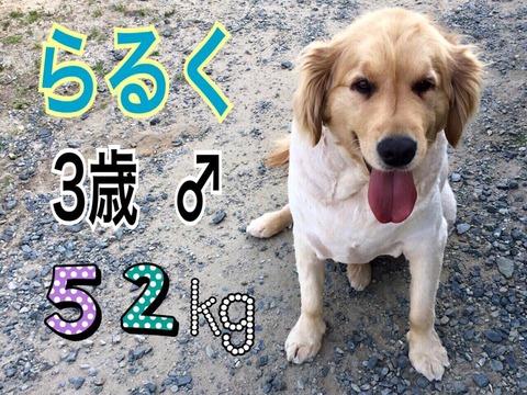 raruku3_52kg