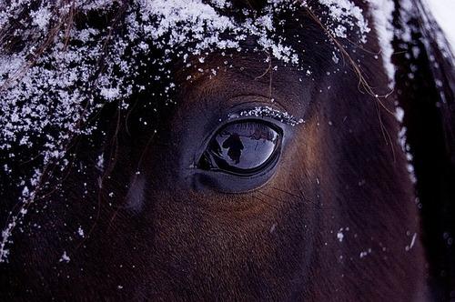 horse-743474_640