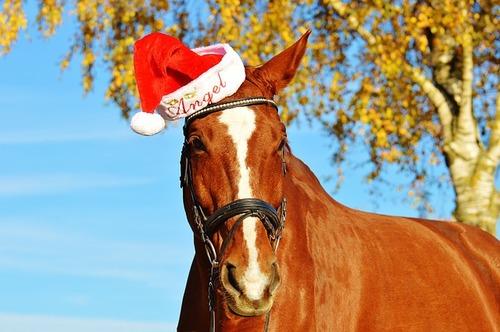 horse-1036121_640